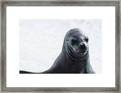 Earless Seal Framed Print by Happy Home Artistry