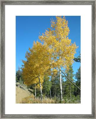 Framed Print featuring the photograph Early Autumn Aspens by Gary Baird