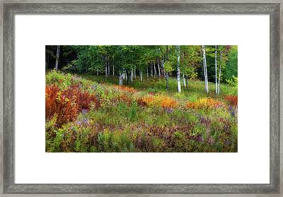 Early Autumn Colors Framed Print by Bill Wakeley