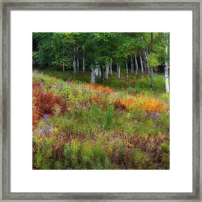 Early Autumn Colors Square Framed Print by Bill Wakeley