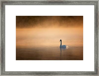 Early Bird 2015 Framed Print by Bill Wakeley