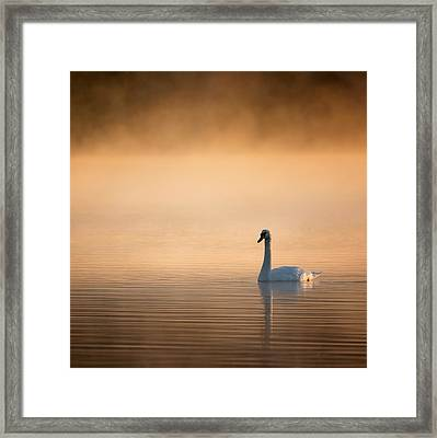 Early Bird Square Framed Print