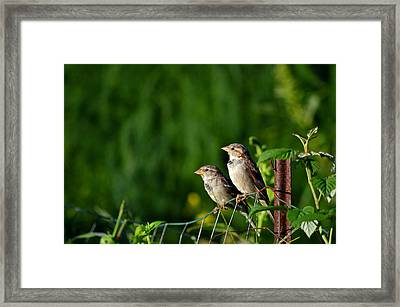 Early Birds In The Garden Framed Print
