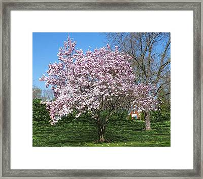 Early Blooms Framed Print