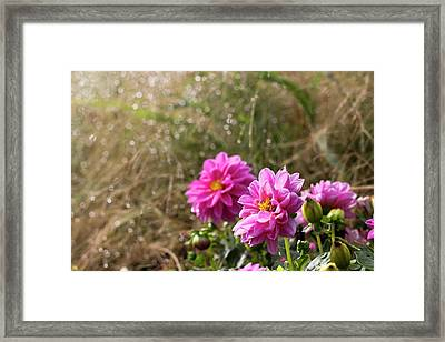 Framed Print featuring the photograph Early Breath by Helga Novelli