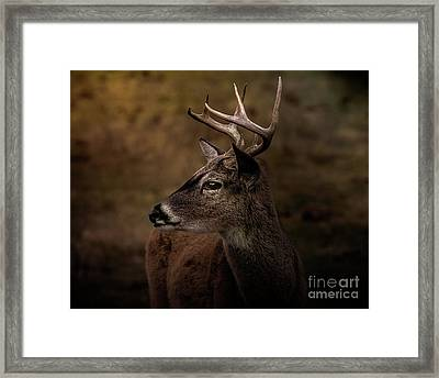 Framed Print featuring the photograph Early Buck by Robert Frederick