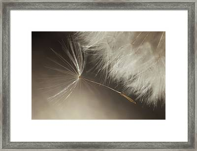 Early Departure Framed Print by Amy Tyler