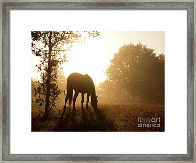 Early Fall Morning Framed Print