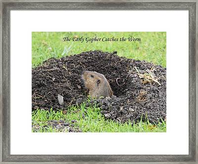 Early Gopher Catches The Worm Framed Print