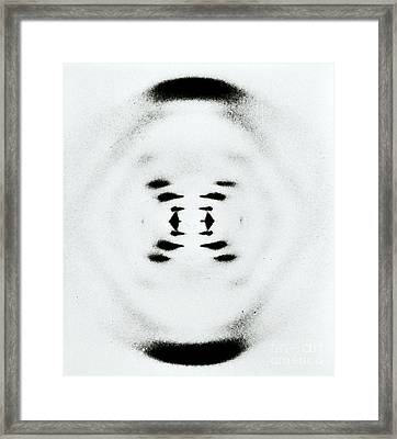 Early Image Of Dna Framed Print by Omikron