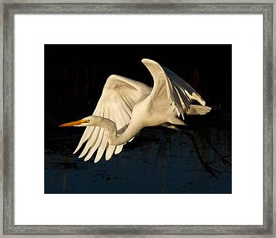 Early Light Egret Framed Print