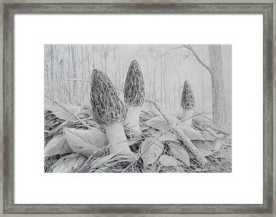 Early May Morchella  Framed Print