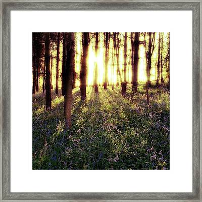 Early Morning Amongst The Framed Print