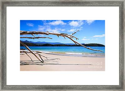 Early Morning At Cockle Creek Framed Print