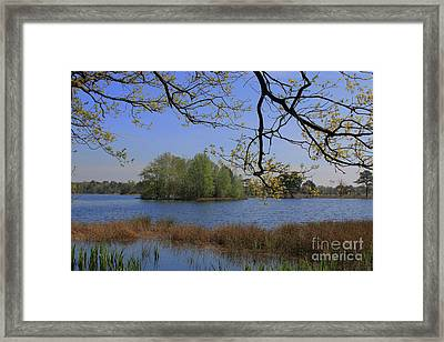 Early Morning At The Lake Framed Print