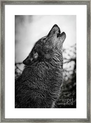 Early Morning Call Framed Print