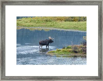 Early Morning Crossing In Grand Teton Framed Print