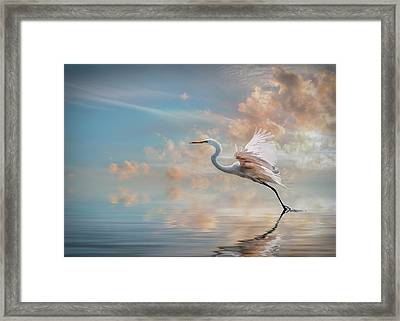Early Morning Egret Framed Print by Brian Tarr