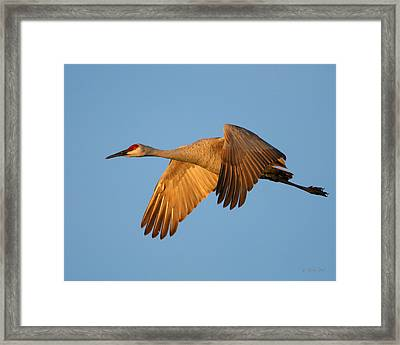 Framed Print featuring the photograph Early Morning Flight by Gerry Sibell