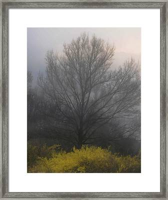 Early Morning Fog Framed Print by Gerlinde Keating - Galleria GK Keating Associates Inc