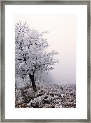 Early Morning Frost  Framed Print