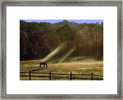 Framed Print featuring the photograph Early Morning Grazing by Diane Merkle