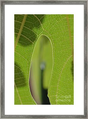Early Morning Greens 1 Framed Print by Eva Maria Nova