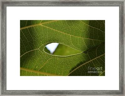 Early Morning Greens 2 Framed Print by Eva Maria Nova