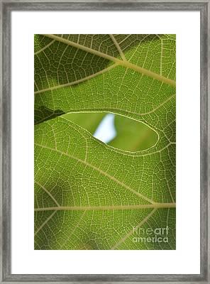 Early Morning Greens 3 Framed Print by Eva Maria Nova