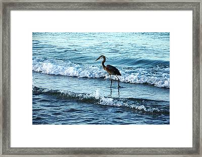 Early Morning Heron Beach Walk Framed Print