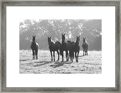 Early Morning Horses Framed Print