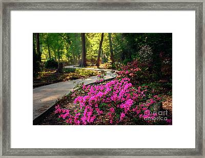 Early Morning In Honor Heights Park Framed Print by Tamyra Ayles
