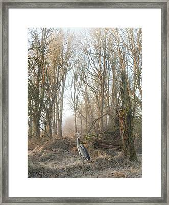 Framed Print featuring the photograph Early Morning In The Backwoods by Angie Vogel