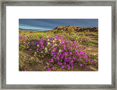 Early Morning Light Super Bloom Framed Print by Peter Tellone