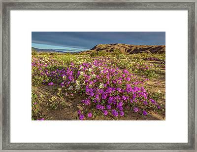 Early Morning Light Super Bloom Framed Print