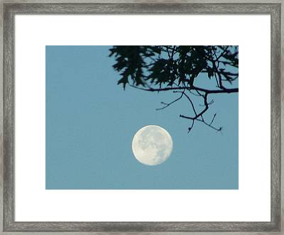 Early Morning Moon Framed Print