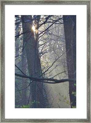 Early Morning Rays Framed Print by Bill Cannon