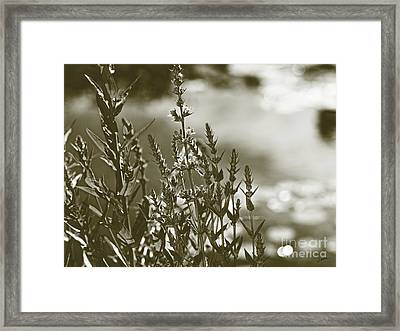 Early Morning Reflections Framed Print