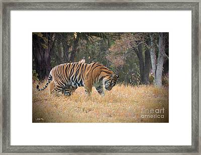 Early Morning Reign Framed Print by Judy Kay