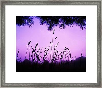 Early Morning Rise Framed Print