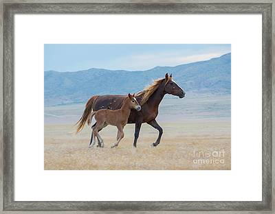 Early Morning Run Framed Print by Nicole Markmann Nelson
