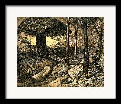 Woodland Drawings Framed Prints