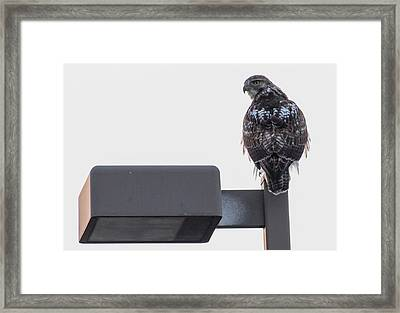 Framed Print featuring the photograph Early Morning Sentinel   by Ricky L Jones