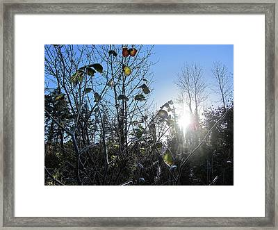 Early Morning Sun Framed Print by Andy Walsh