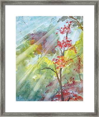 Early Morning Sun Framed Print by Kris Dixon