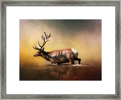 Early Morning Swim Framed Print by David and Carol Kelly