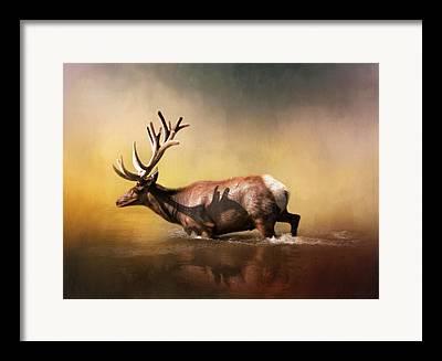 Bull Elk Framed Prints