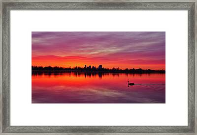 Early Morning Swim Framed Print