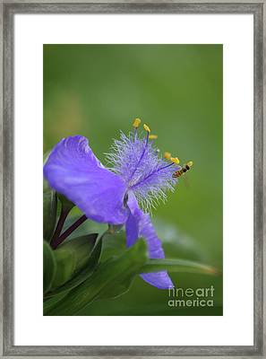 Framed Print featuring the photograph Early Morning Visit by Christine Amstutz