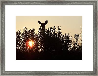Early Morning Visitor Framed Print by Laurie Prentice
